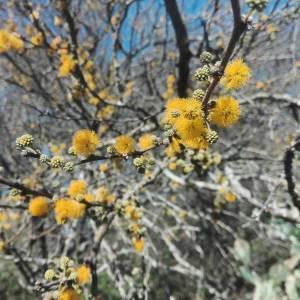 Reflexiones en el Día del Árbol Entrerriano